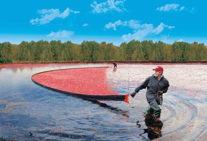 Wet Harvesting